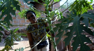 Herieth looking out from a papaya tree.